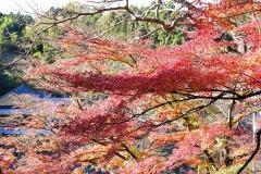 11/23 三連休、松ヶ岡公園の紅葉